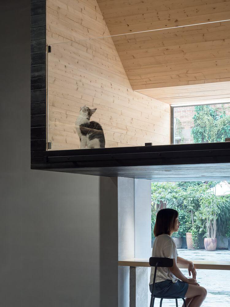 Thiết kế tạo sự cân bằng giữa người và mèo